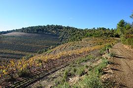 Randonnée vigne Var